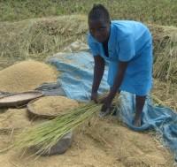 Malawian.Farmer