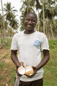 Gilbert Drabo breaks open a freshly-harvested coconut