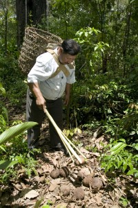 Juan Roca going to the forest to collect the Brazil nuts in Londres, Pando Region, Bolivia. Photo: Eduardo Martino