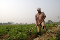 Rice Farmer: Daman Ram